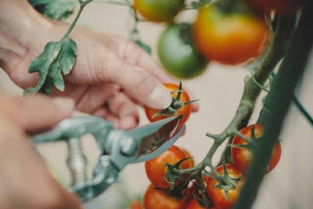 家庭菜園ブランド「UETE」の特徴