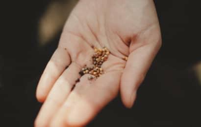 高品質な種苗や培土を提供